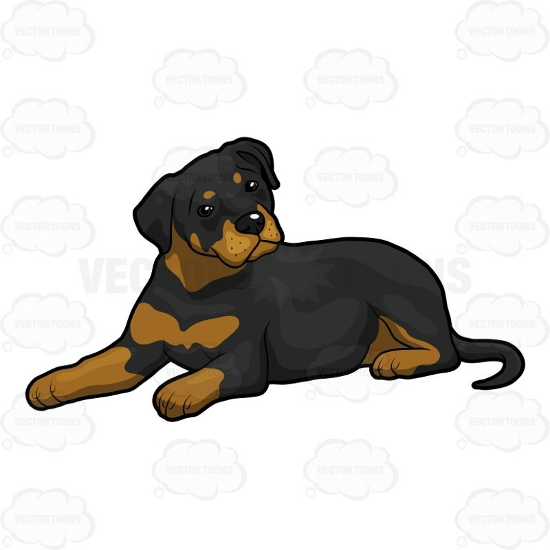 Rottweiler Relaxing With Images Animal Drawings Rottweiler