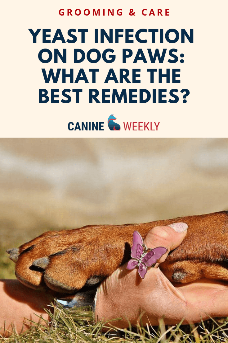 Yeast Infection on Dog Paws: Are There Any Home Remedies? | Dog Care