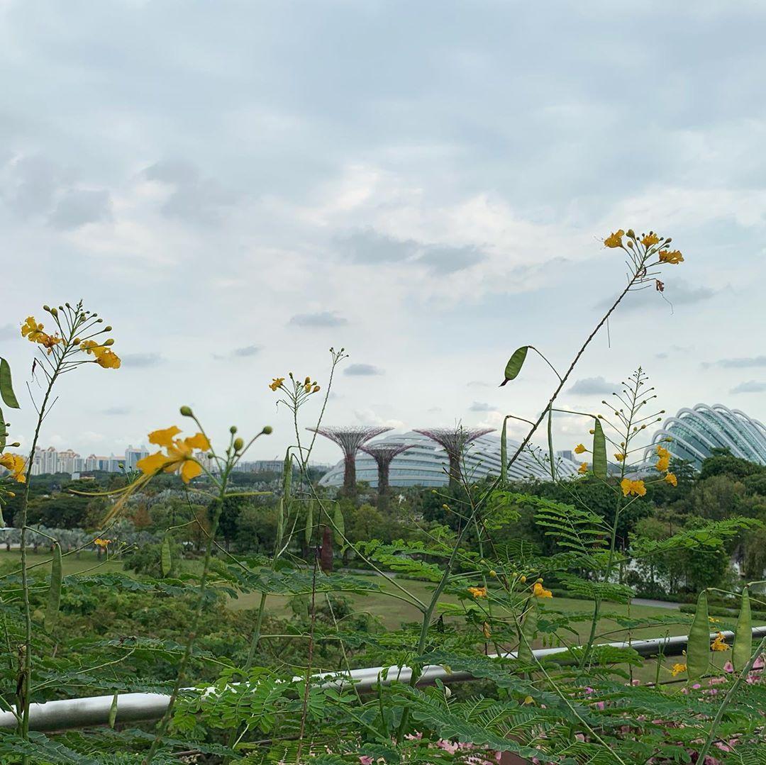 2019夏休み singapore gardensbythebay Plants, Garden