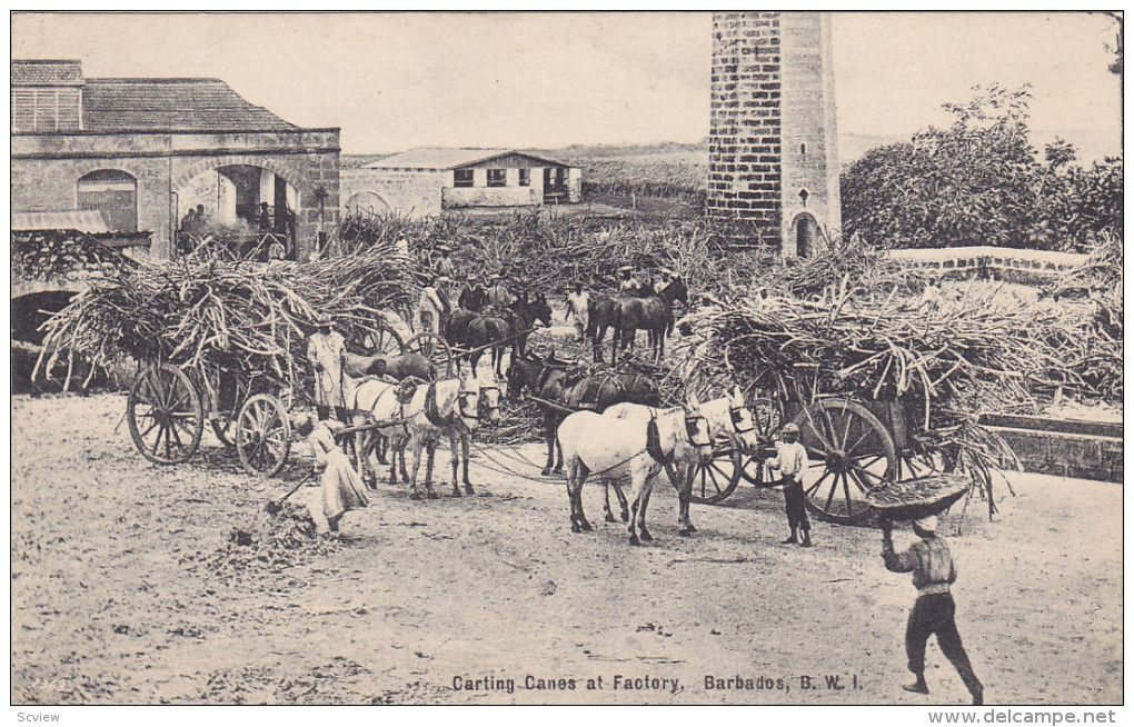 BARBADOS British West Indies Carting Canes At Factory Horse Drawn Wagons 00