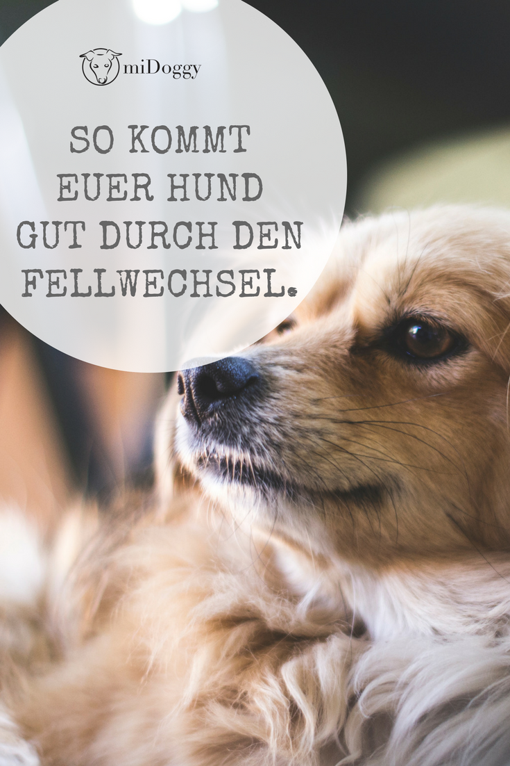 Der Fellwechsel Warum Wieso Was Hilft Midoggy Community Hunde Welpen Hunde Erziehen