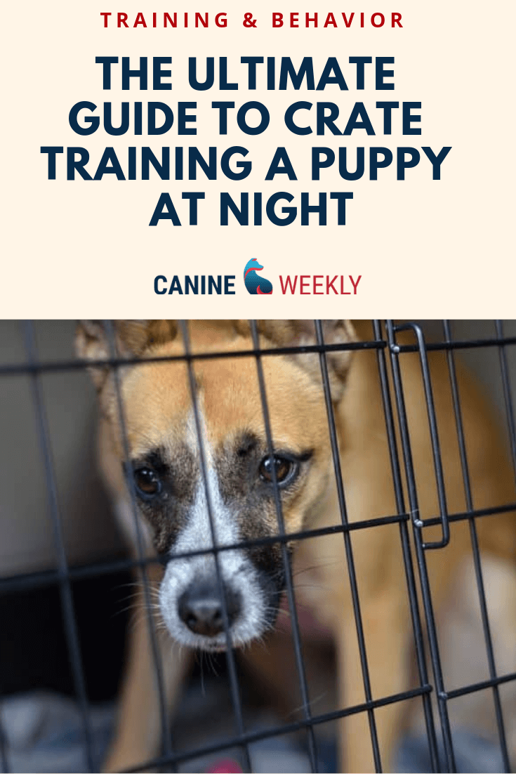 How To Train A Puppy Not To Cry In The Crate At Night Puppy Training Kennel Training A Puppy Puppies
