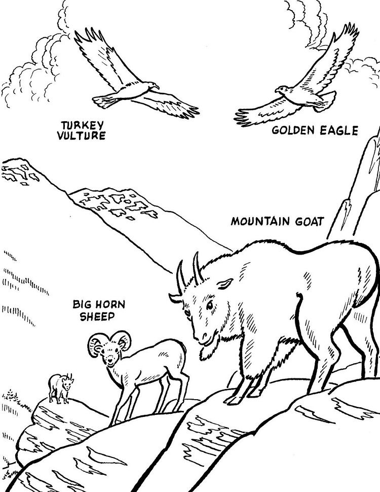 Mountain Animal Coloring Pages