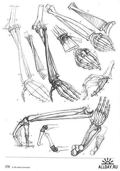 Hand's skeleton **