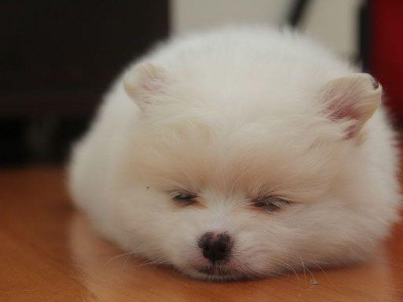 Gute Nacht Zehn Schlafende Hunde Die Man Sehen Muss Seite 9 Hunde Videos Hunde Schlafen Hunde
