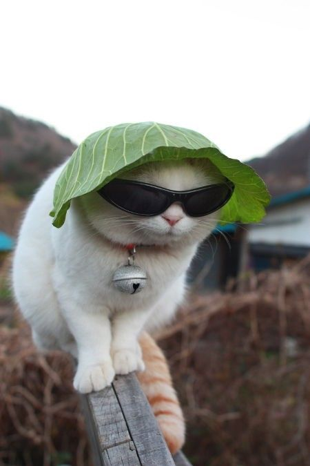 Cabbage Hat Kitty