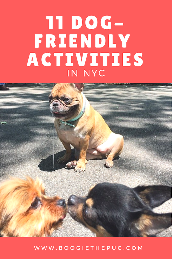 11 Dog-Friendly Activities in NYC | Dog Friendly Places | Dog