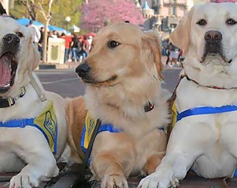 These Photos of Service Dogs at Disneyland Will Make Your