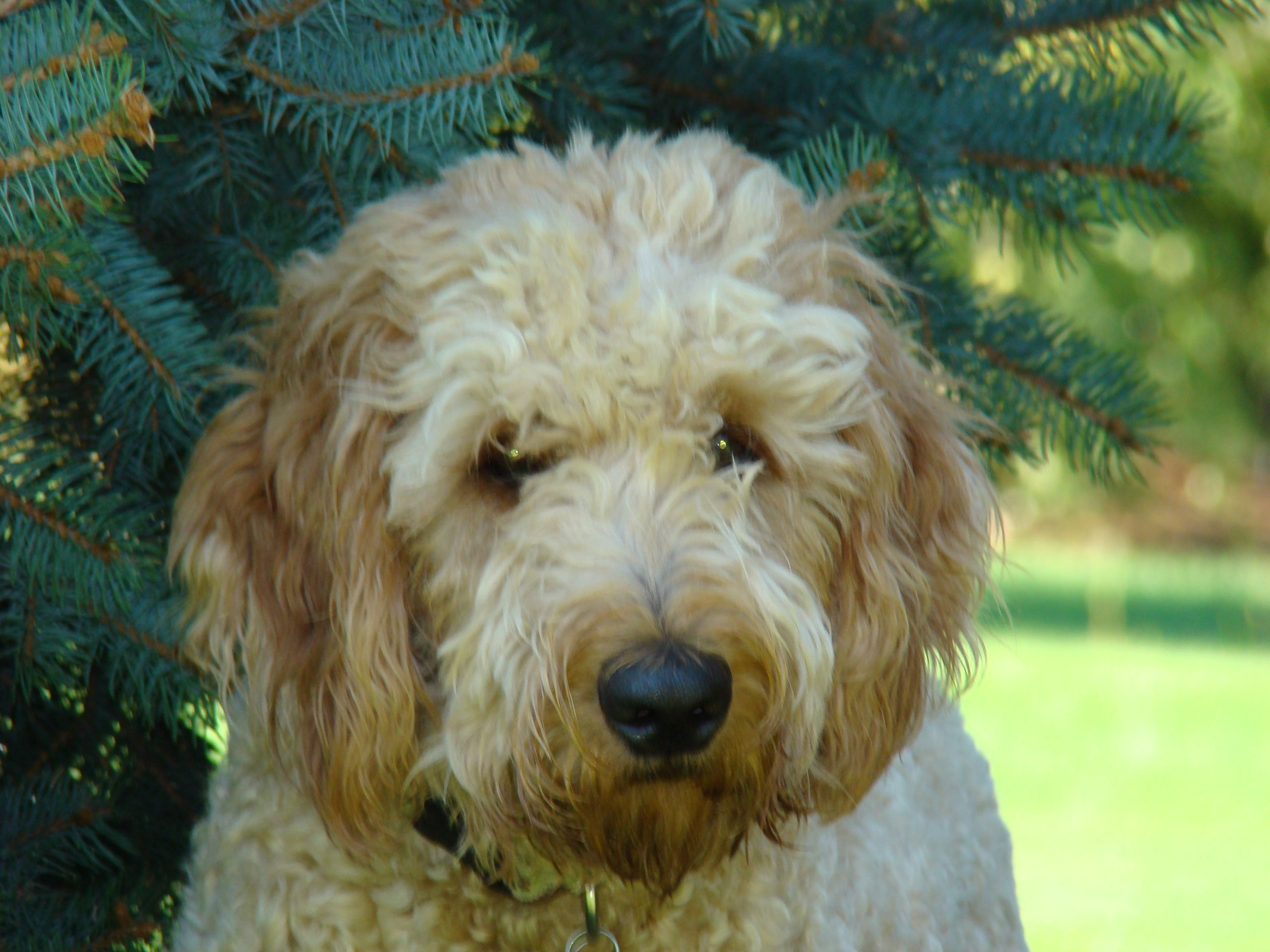Puppies For Sale In Idaho Boise References