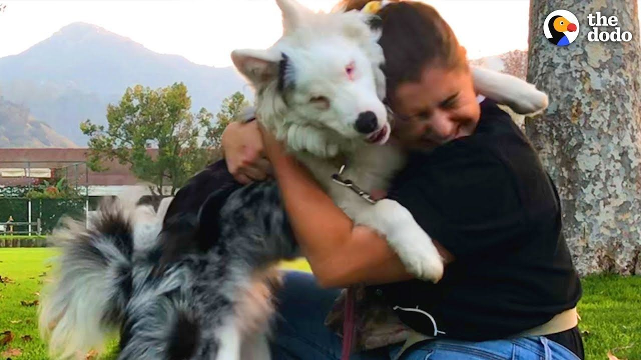 Deaf And Blind Dog Knows Special Language The Dodo Youtube
