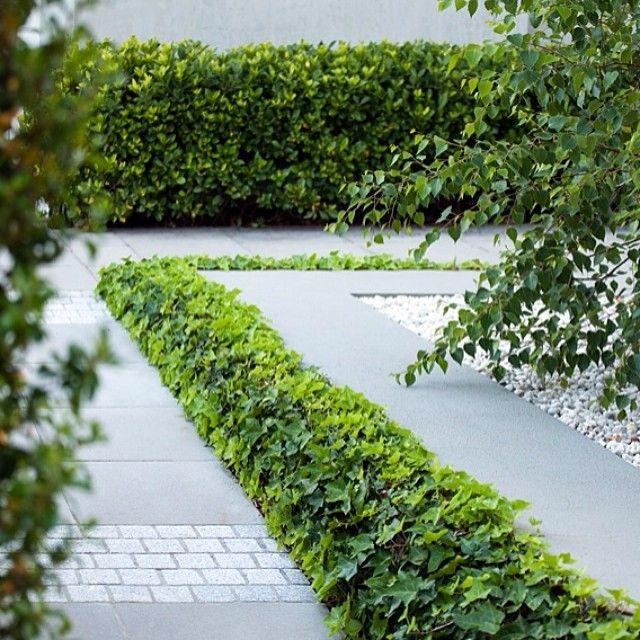 Our paving detail #eugenegilligandesign #melbournegardendesign #melbourne #design #plants #ivy #paving #gardendesign #contemporarydesign