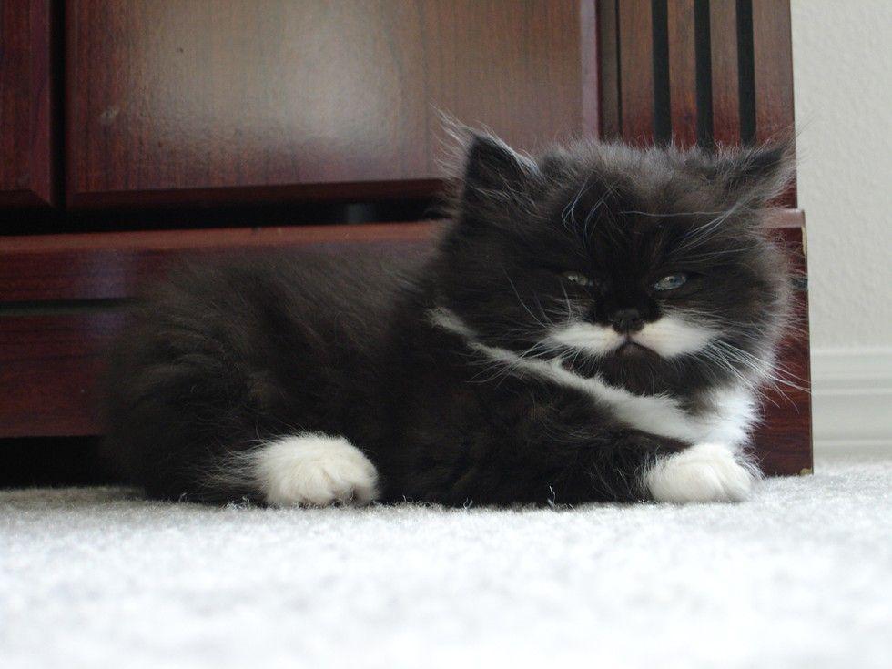 Ridiculous grumpy kitty