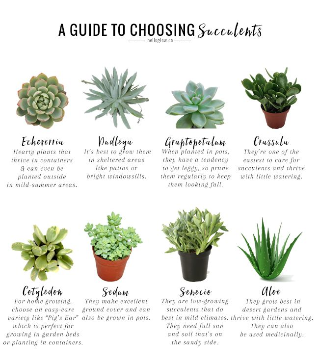 The No Fail Guide to Choosing Growing Succulents Growing