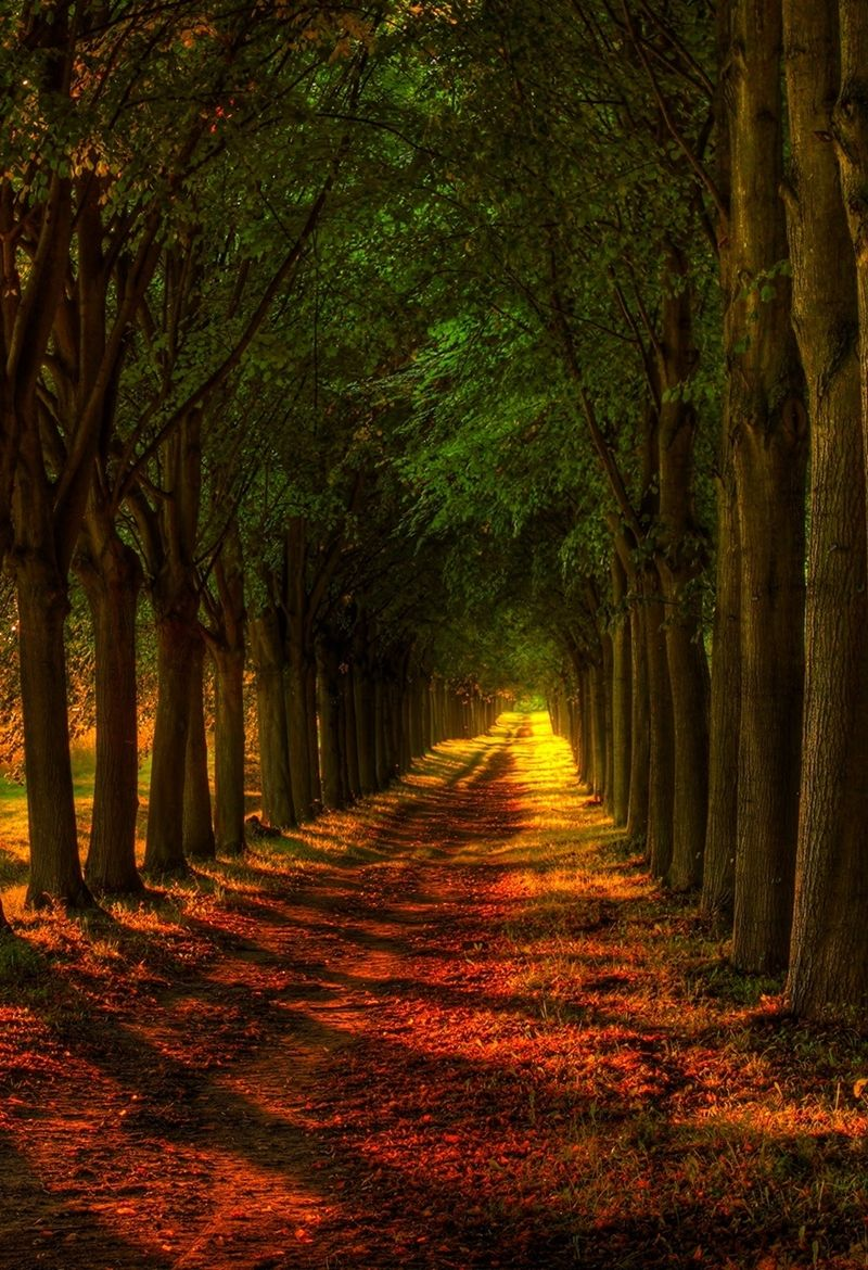 Forest Pathway Awesome Beautiful Roads Country