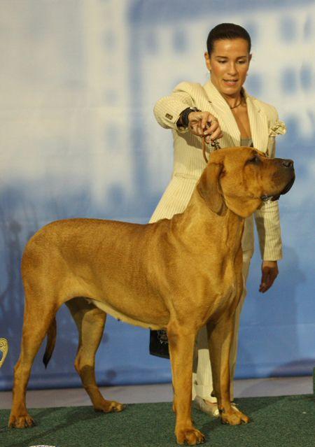 ヨーロッパの危険犬種禁止法に物...