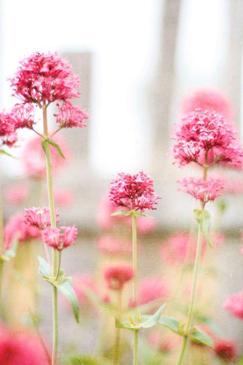 Fleurs des prés.