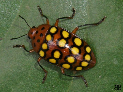 Pix For > Colorful Beetles Identification | Insects ...