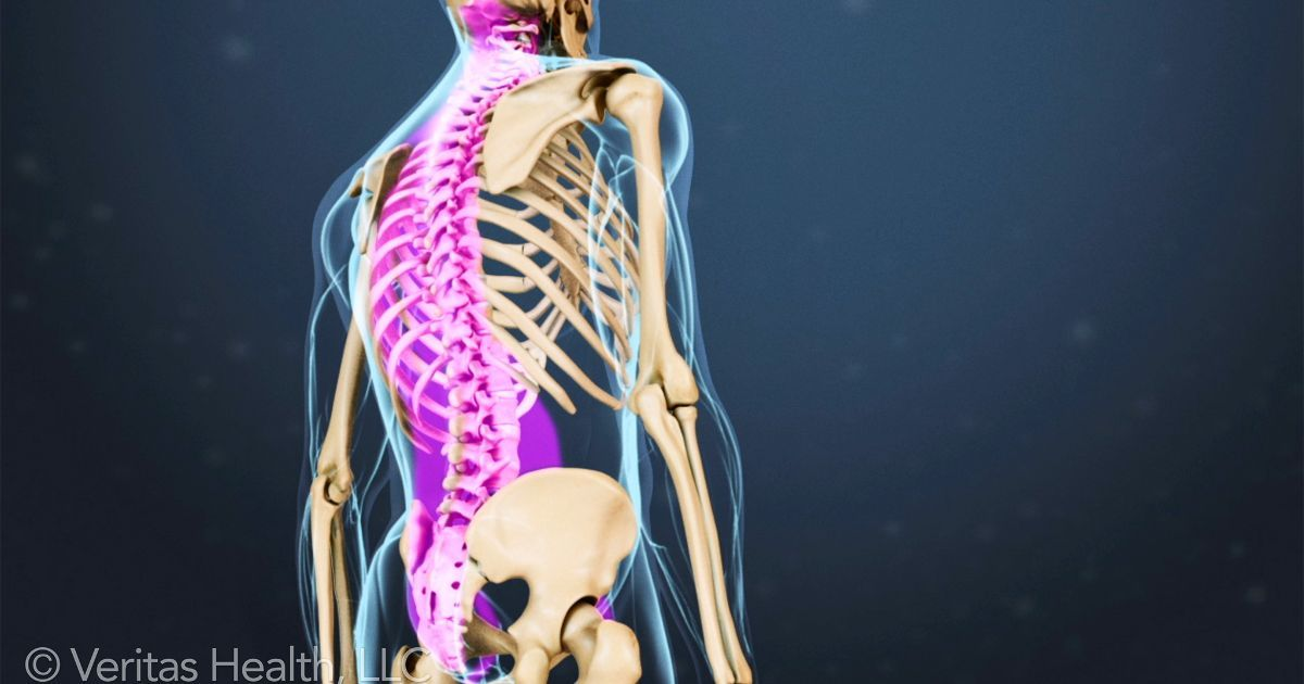 Spinal Anatomy and Back Pain | Anatomy and Remedies