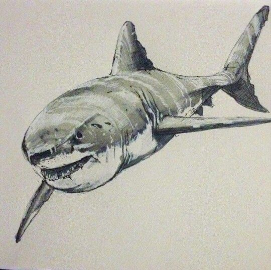 The great white shark! Quick sketch | diseños de peces | Pinterest ...
