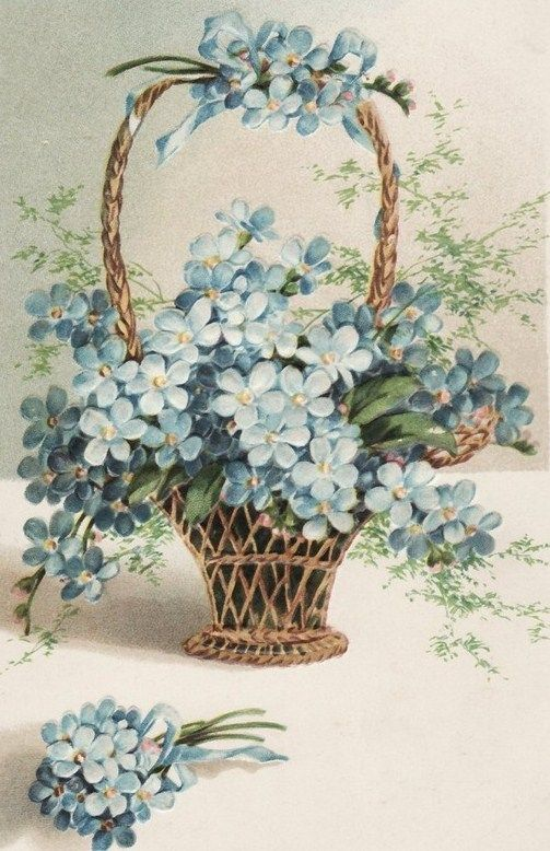 Basket of Forget me nots