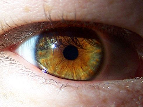 Hazel Eyes Gold Brown And Green Combo Most Beautiful Eye Color