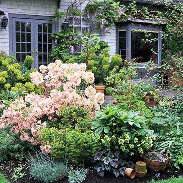 Photo of Rhododendrons Are Prized for Their Glossy Green Foliage and Showy Clusters of Blooms