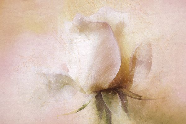 Rustic Rose by Terry Davis