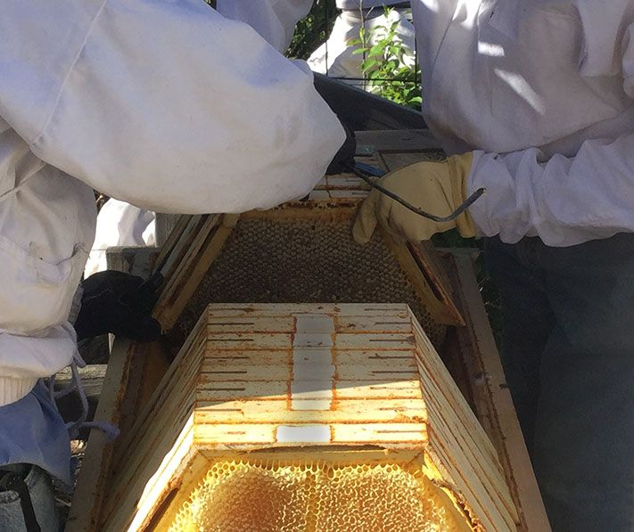 The Cathedral Hive® - Fully Assembled | Top bar hive ...