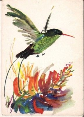 Pocztowka Grabianski Koliber Ptak Ruch 63 6515531769 Oficjalne Archiwum Allegro Art Painting Bird