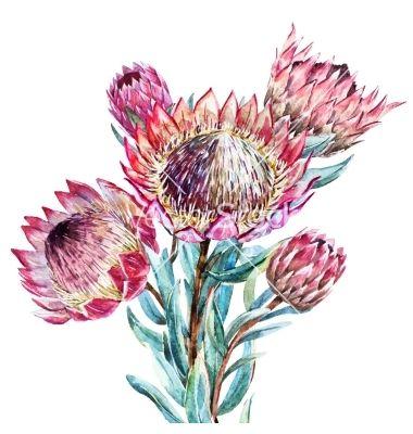 Untitled King Protea Natalie Martin Watercolorarts Protea Art Botanical Art Botanical Watercolor