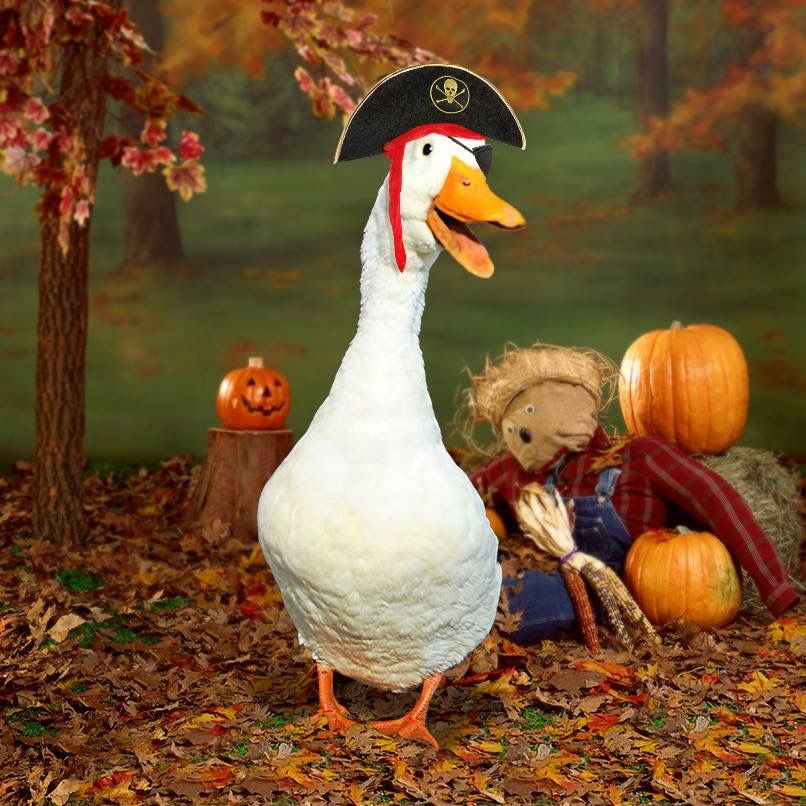 Pin by Alyson Scott on Funny Animals, Aflac Duck Wildlife