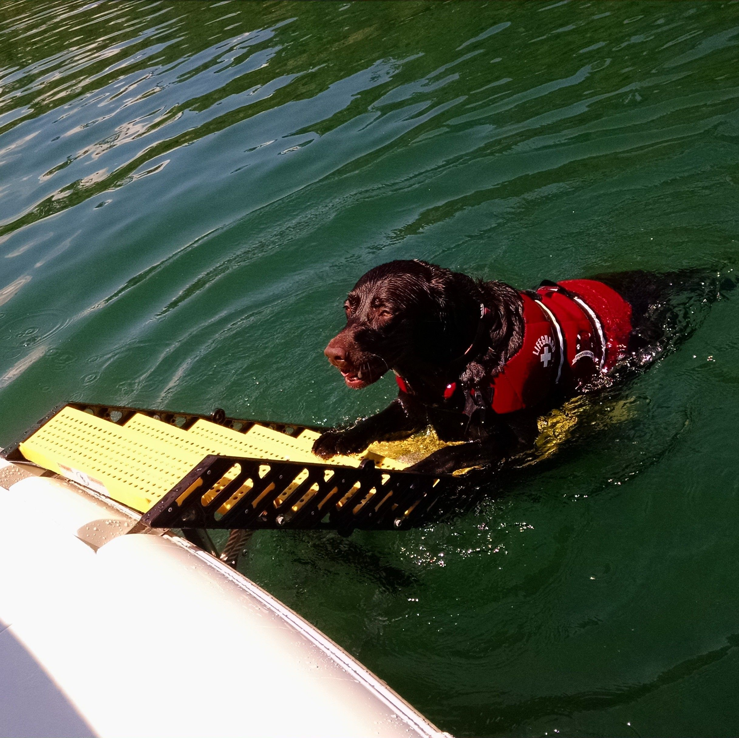 Maddie with WAG Boarding Steps™ Model SLM-12 | WAG Users