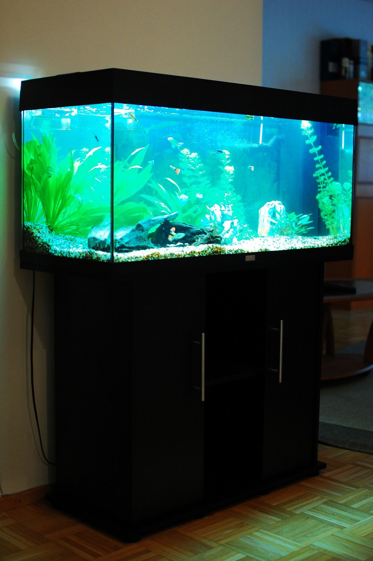 aquarium juwel rio 180 aquarium pinterest aquariums. Black Bedroom Furniture Sets. Home Design Ideas