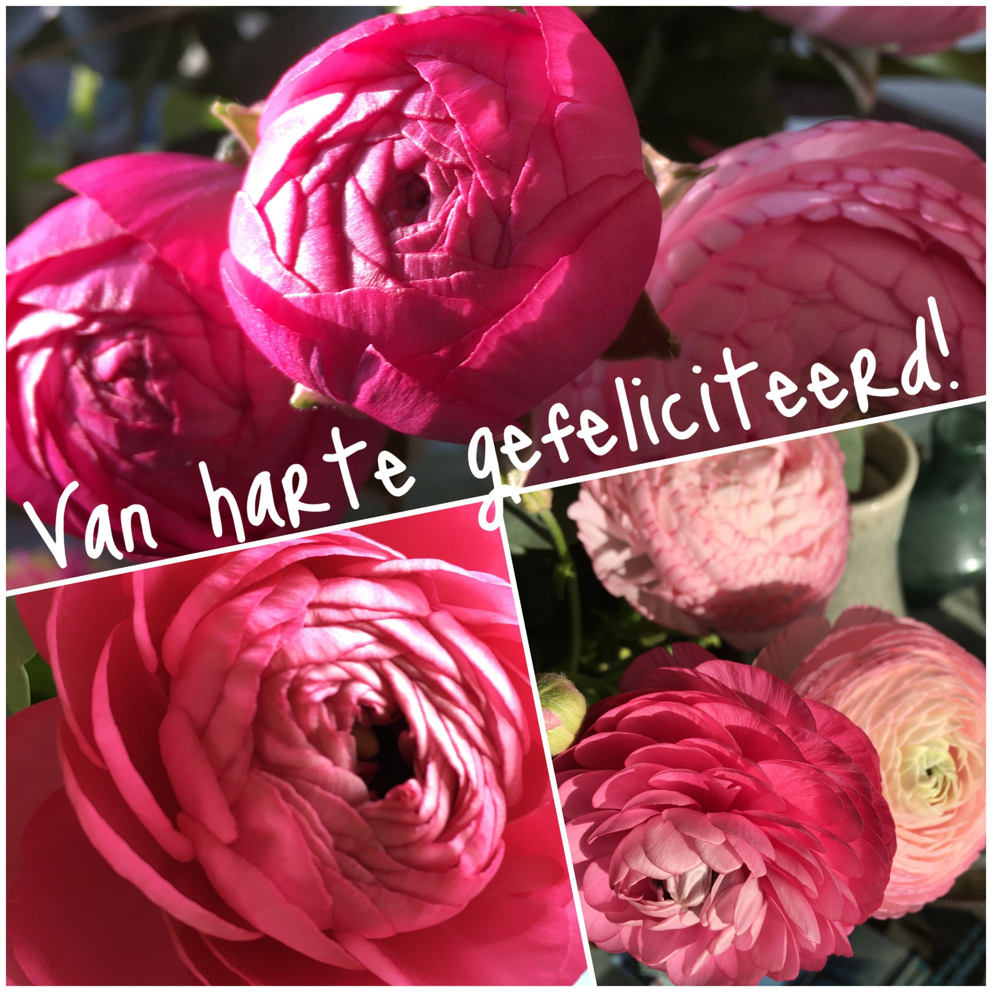 gefeliciteerd roze bloemen