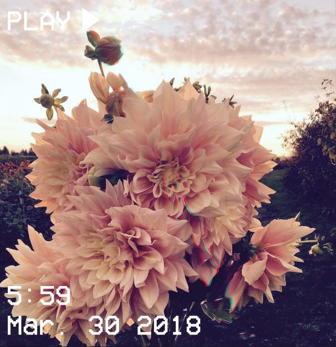 M O O N V E I N S 1 0 1 Vhs Aesthetic Sunset Flowers Pink Orange Yellow Petals F Aesthetic Pictures Wallpaper Backgrounds Aesthetic Photography
