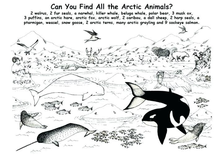 Antarctica Coloring Page Antarctic Animals Coloring Pages