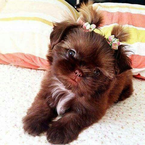 Pin By Korona Rajan On Puppies And Doggies Cute Animals Puppies