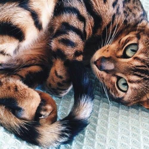 Imagen de cat, animal, and eyes