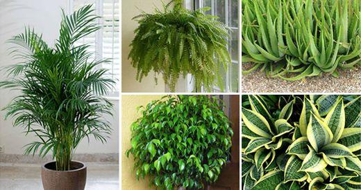 Le piante per interno sono un elemento basico per la decorazione ...