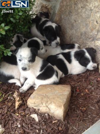 3770209 Go Lsn Local Sales Network Furry Friend Animals Collie