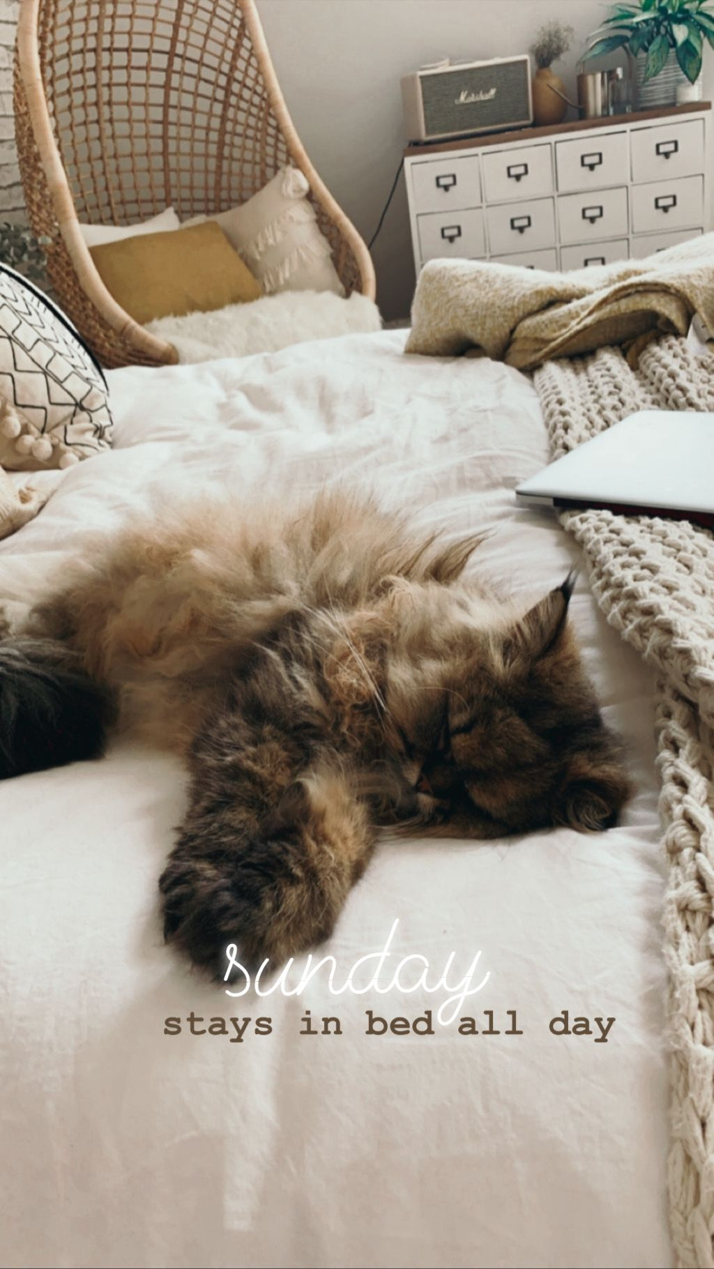 Sleepy Cat Instagram Story Cat Stories Instagram Story Ideas