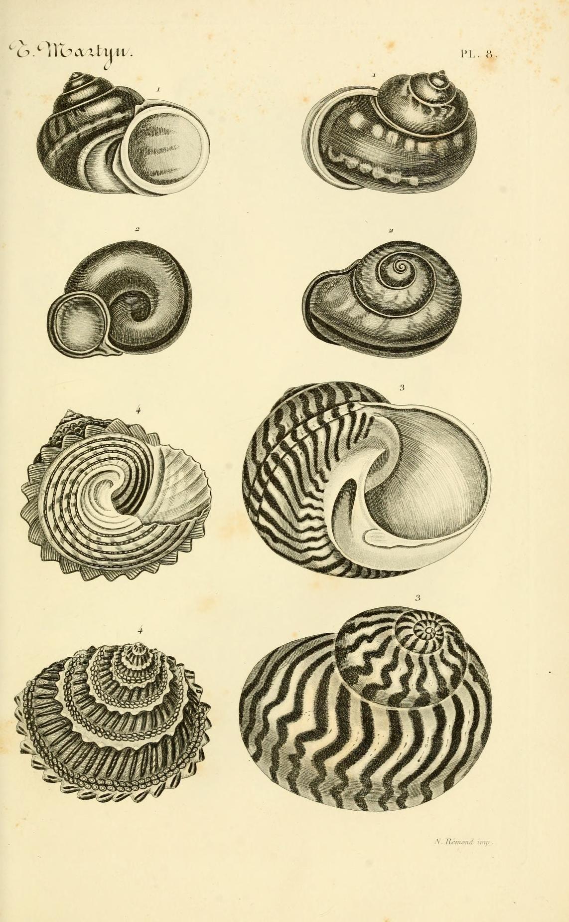 Le Conchyliologiste Universel Ou Figures Des Coquilles Jusqu A Present Inconnues Recueillies En Divers Voyages A La Coquillage Dessin Art Coquillage Coquille
