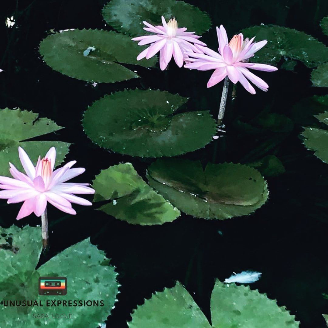 A lotus is a powerful symbol of peace and it has spiritual