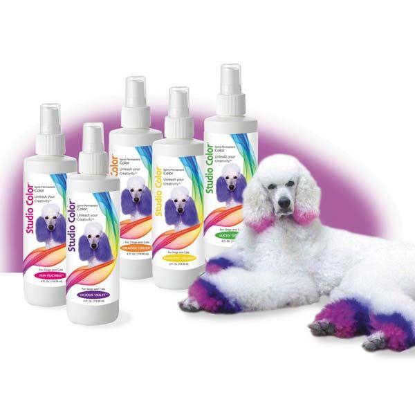 Pin By Suanne Kimmel On Ballons 28 In 2020 Dog Hair Dye Dog Hair Halloween Hair Dye