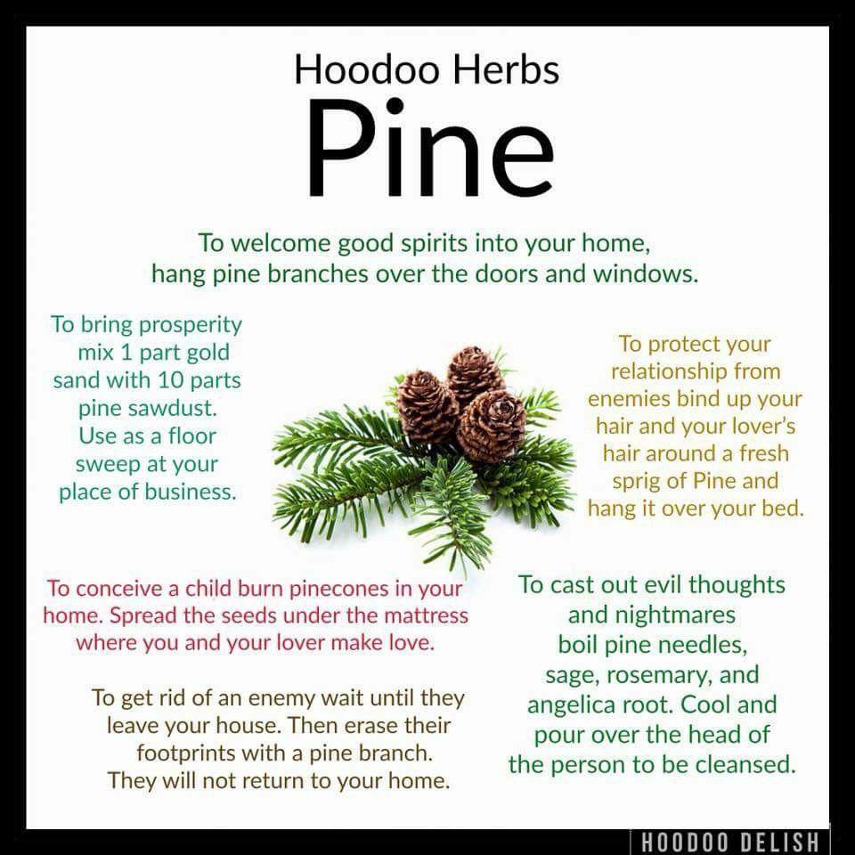 Pin by ELIZABETH King on Magickal Herbs   Pinterest   Magick, Voodoo ...