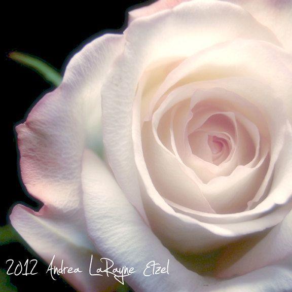 Whimsical Still Life Photography, Shabby Chic Pink Rose - 5X5 Art Print. $5.00, via Etsy.