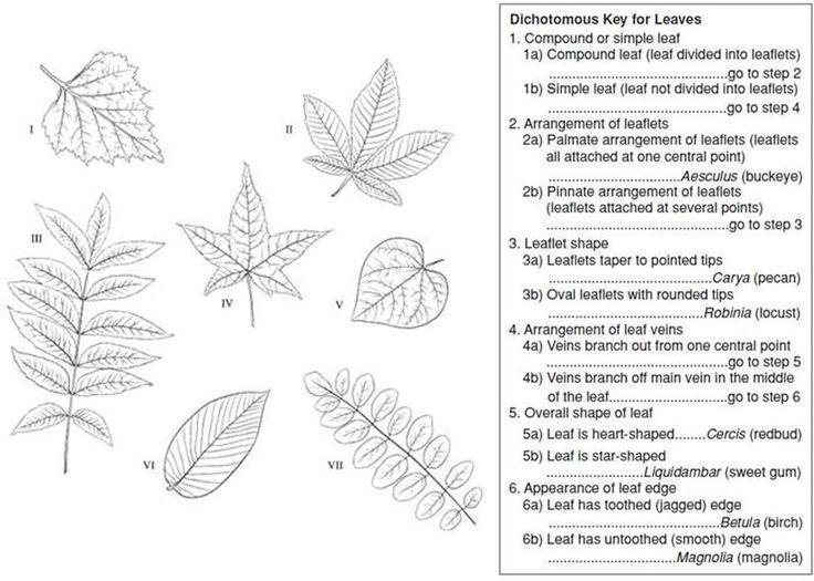 Dichotomous Key Dichotomous Key Biology Worksheet Science Teaching Resources Dichotomous key worksheet