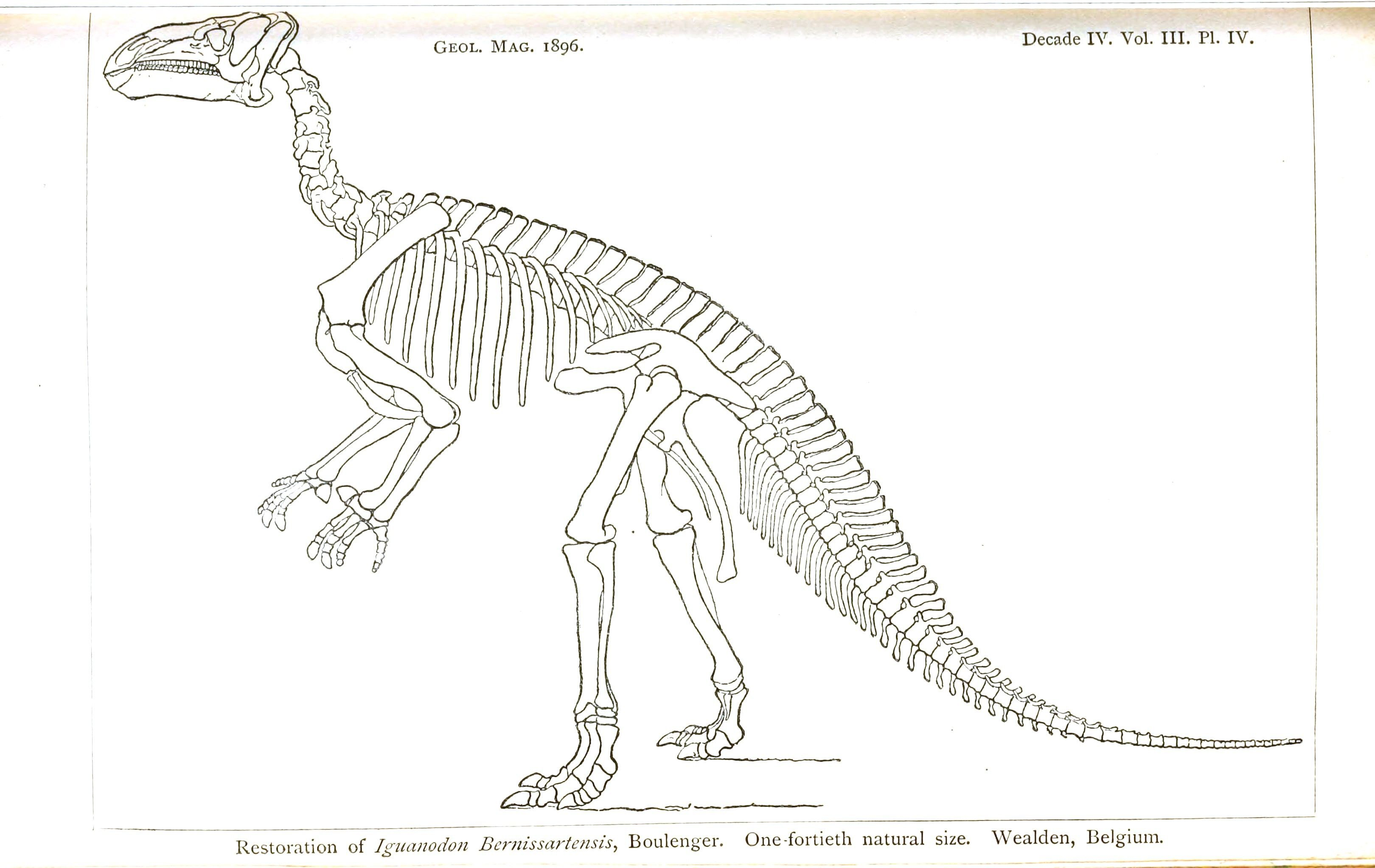 Dinosaurs Bones Coloring Pages