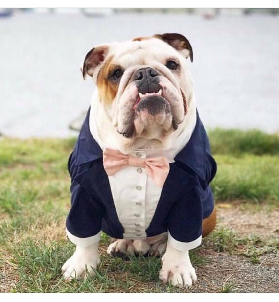 Navy blue dog tuxedo with blush bow tie Dog wedding attire | 5/26 ...
