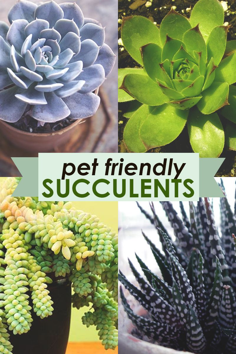 Check out these pet-friendly, nontoxic succulents (according to the ASPCA)  that we're always planting at Plant Nite events.